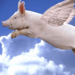 Pigs Are Flying Today!