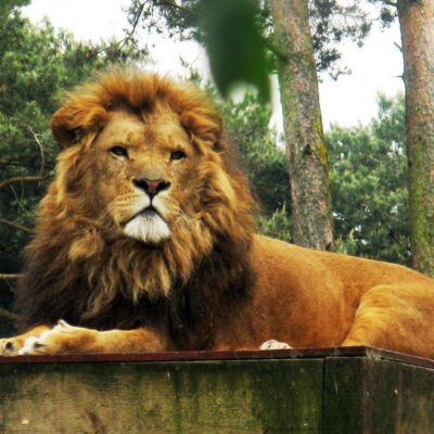 Photography Finds : The Majestic King