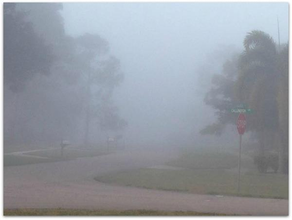 Foggy Florida Morning