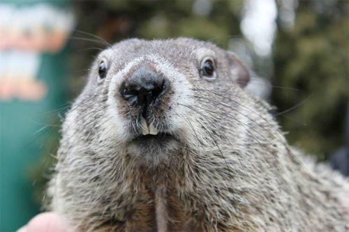 groundhog-01