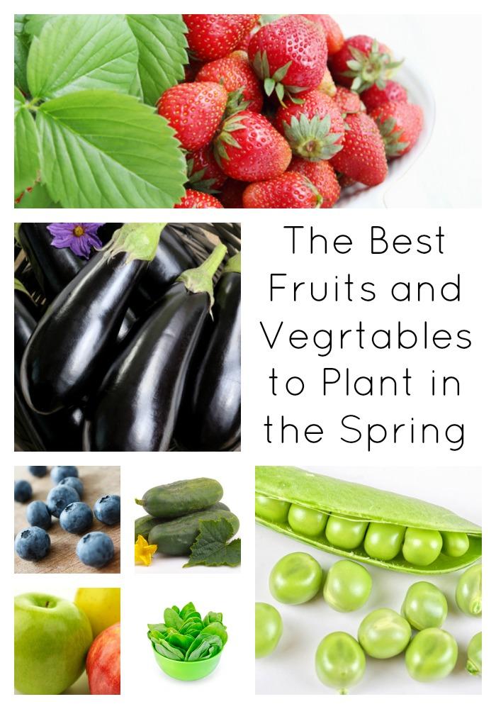 best-fruit-vegetables-plant-spring