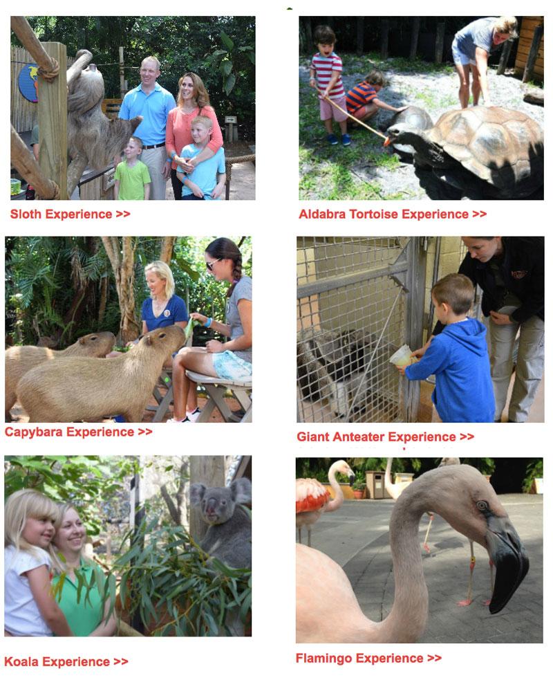 animal-experience-palm-beach-zoo