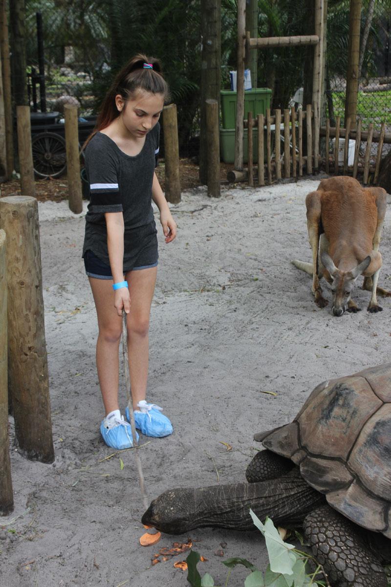 animal-experience-palmbeachzoo