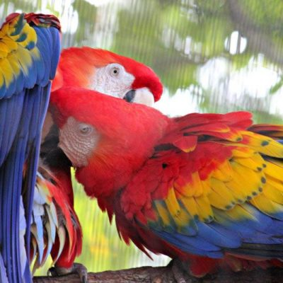 Magnificent Macaw : Palm Beach Zoo Series