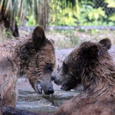 Beary Friendly : Palm Beach Zoo Series