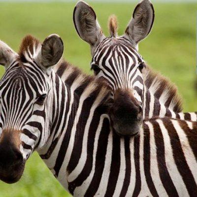 Safari Wilderness Coupon for Florida Residents