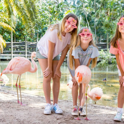 Behind-the-Scenes Animal Experiences Return to Palm Beach Zoo
